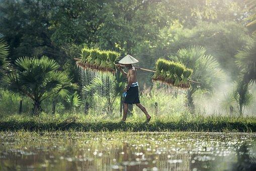 L'agroalimentaire, investir dans une industrie évolutive
